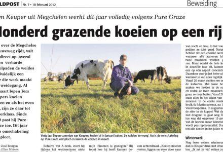 Veldpost - Honderd grazende koeien op een rij 02-2012